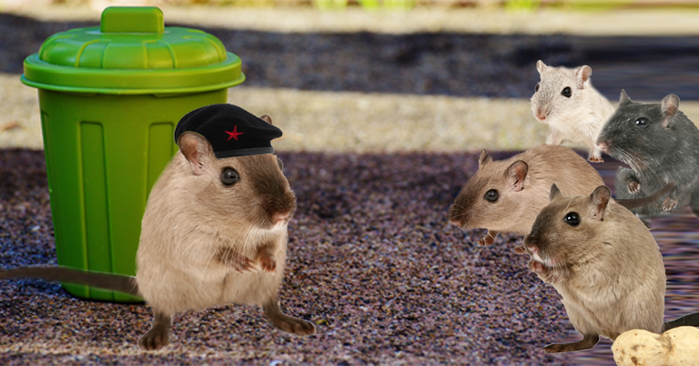 Rat leader to give empowering speech of systematic takedown of Chineserestaurants