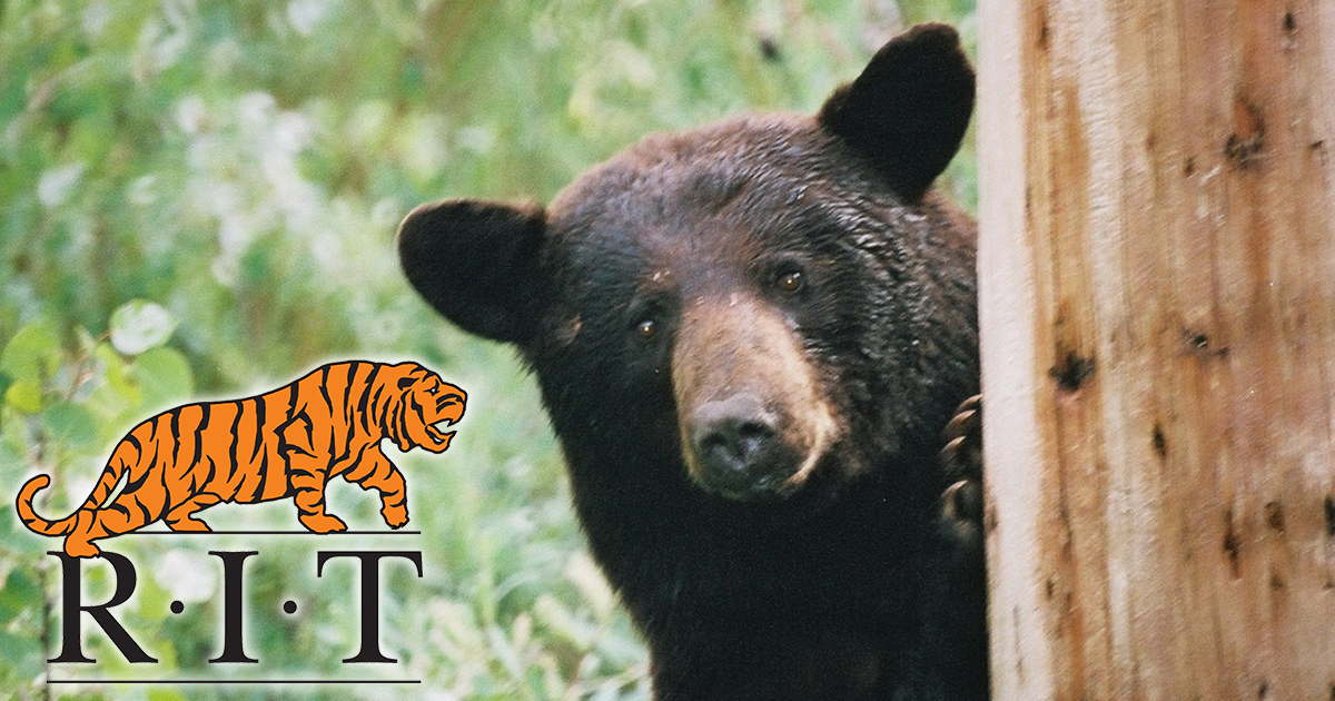 RIT Trying To Collect $100,000 In Student Loans From Bear Trapped InTree