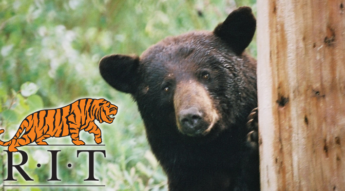 RIT Trying To Collect $100,000 In Student Loans From Bear Trapped In Tree