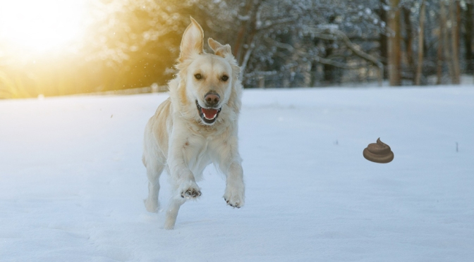 Dog Owner Excited for Snow and Not Picking Up Dog Poop Another Week