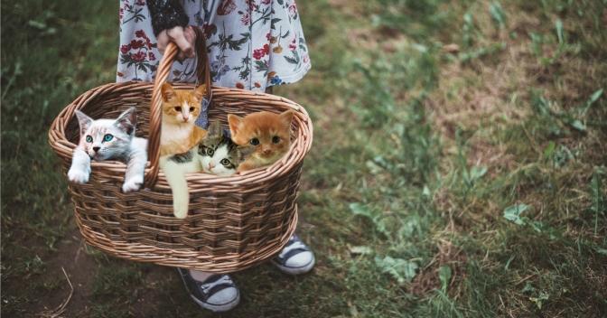 Monroe Avenue Flower Peddler Switches to Kittens
