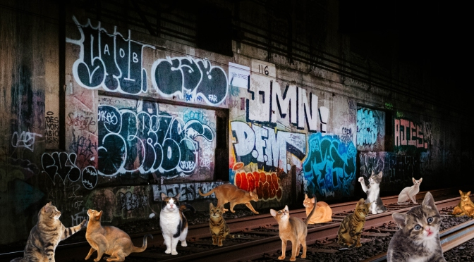 Lollypop Farm Set To Use Abandoned Subway For Cat Overflow