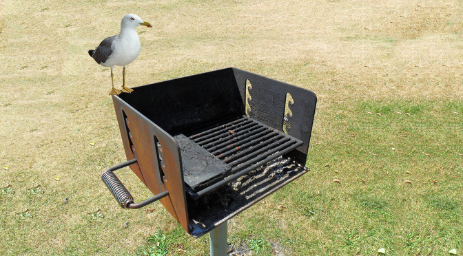 Ontario Beach Seagulls Forced To Produce Their Own Garbage To Eat